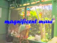 moving stills of Maui set to original music. Ode in sound and pictures by tess heder May 2005